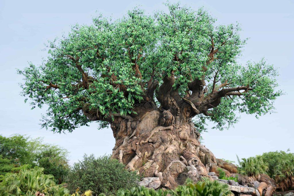 Which Disney World Park Is The Best?